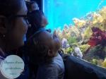 Aquarium2014-2